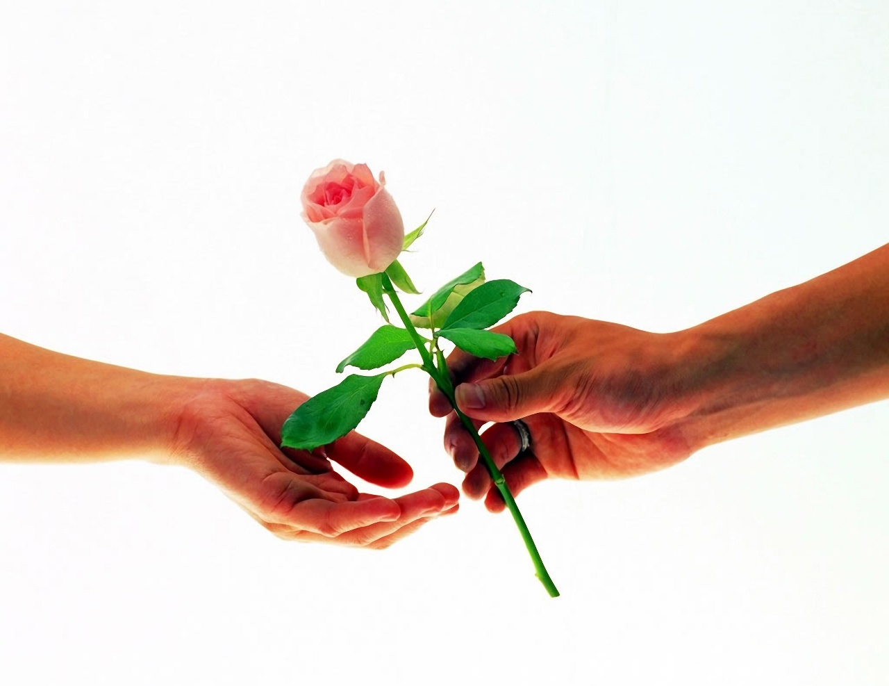Картинки один цветок в руке