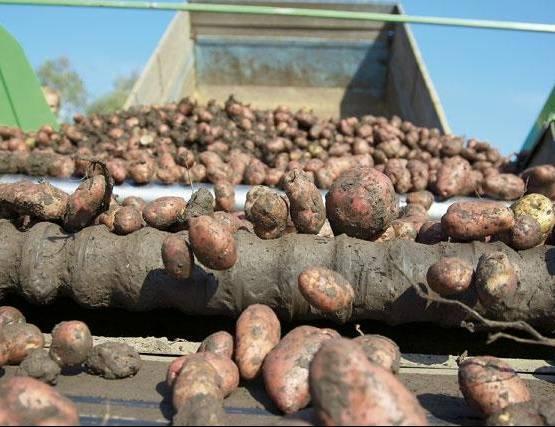 ВМордовии после смерти женщины осужден тракторист