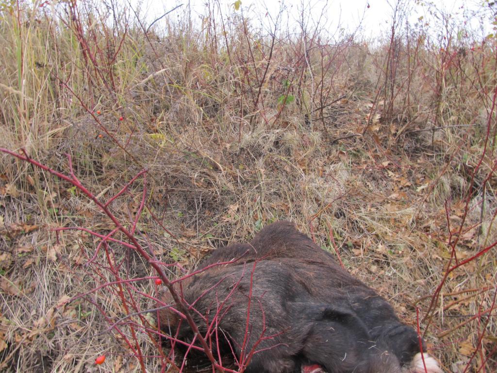 ВАрдатове трое охотников сами разрешили себе уничтожить лося