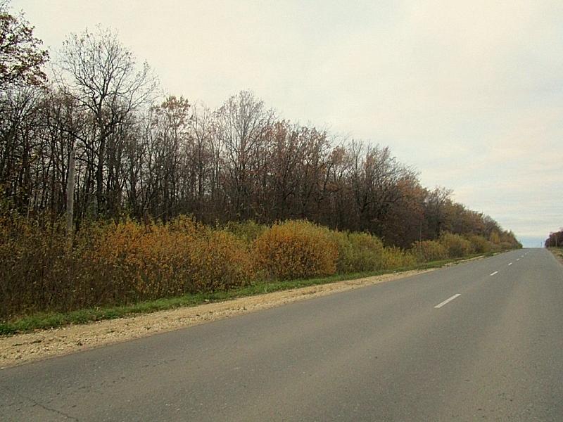ВМордовии полицейские вывели излеса заблудившихся грибников