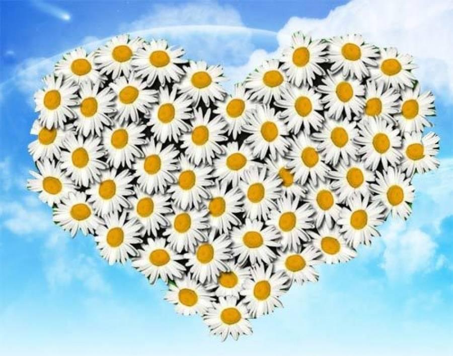 Сами, день семьи любви и верности картинки с ромашками