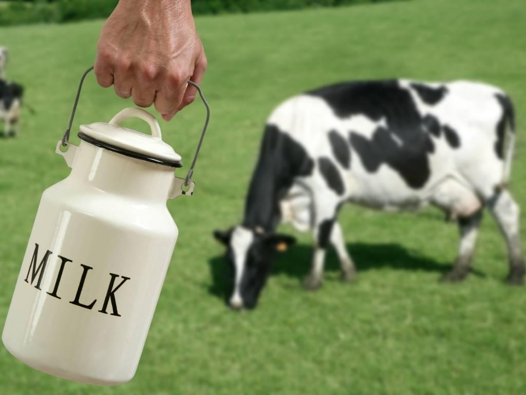 Мордовия хочет увеличить производство молока в1,5 раза