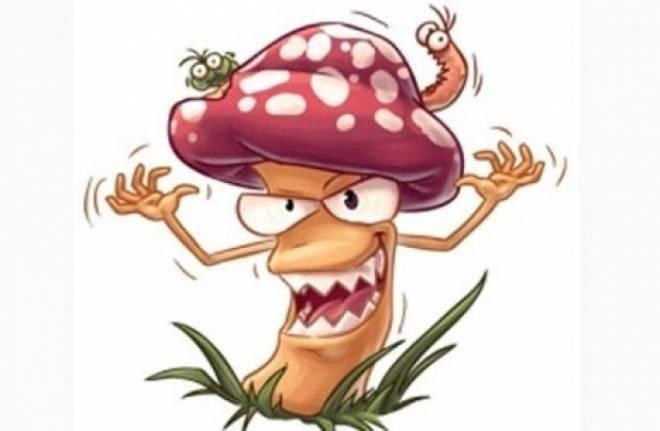 В Мордовии пять человек отравились грибами