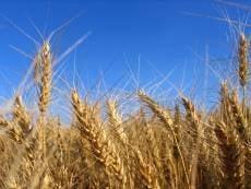 Глава РМ: сезонные сельхозработы в Мордовии выполняются в срок