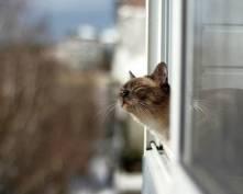 Завтра батареи в квартирах жителей Саранска станут холодными