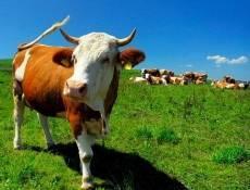 Каждый пятый трудоспособный житель Мордовии работает в сельском хозяйстве