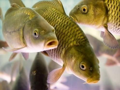 Пруды Мордовии пополнили рыбным «населением»