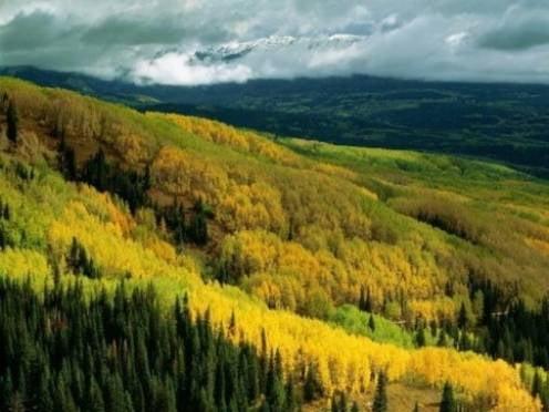 Повышать эффективность управления лесами в Мордовии будет госпрограмма