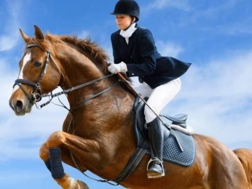 Для развития конного спорта в Мордовии не хватает денег