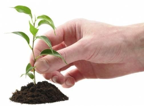 В Мордовии посадят тысячи деревьев