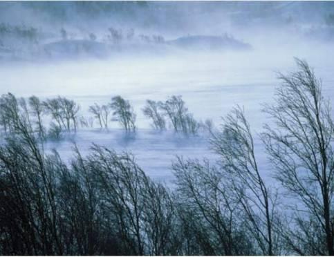 Из-за сильного ветра в Мордовии объявили оперативное предупреждение