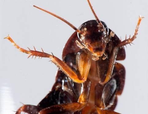 В Саранске коммунальщики заплатят за тараканов в многоэтажке