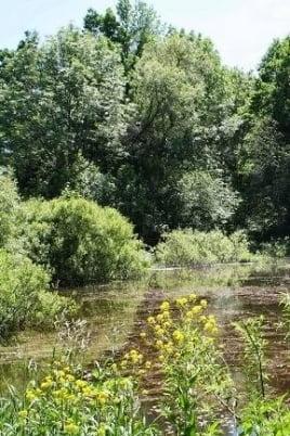 Кладовая мордовских лесов постер
