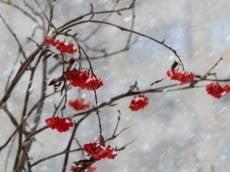 В Мордовии ожидаются сильные порывы ветра