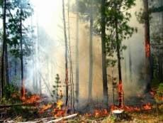 В Мордовии растет угроза лесных пожаров