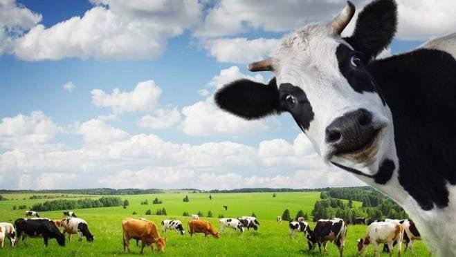 В Мордовии назвали самый «молочный» район