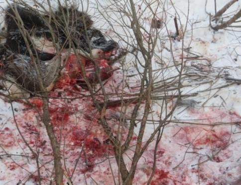 В Мордовии поймали наследившего браконьера