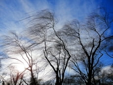 В Мордовии ожидаются сильные порывы ветра и дождь