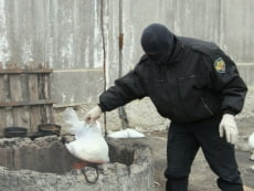 В Мордовии отправили в топку почти 3000 доз наркотикив