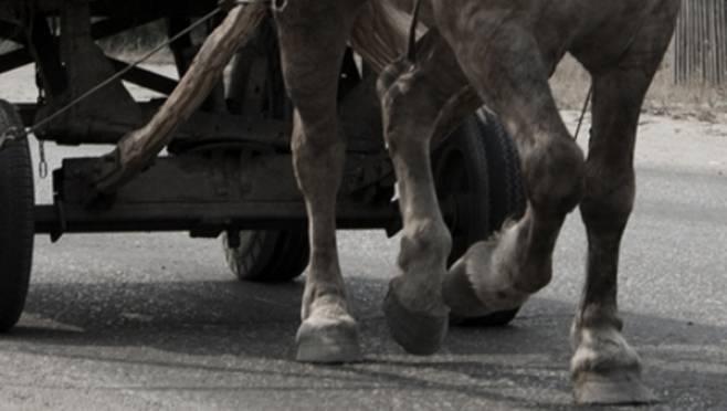 Двух воришек на тележке с лошадью поймали в Мордовии с поличным