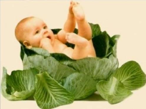 Материнский капитал будут тратить на еду и отдых