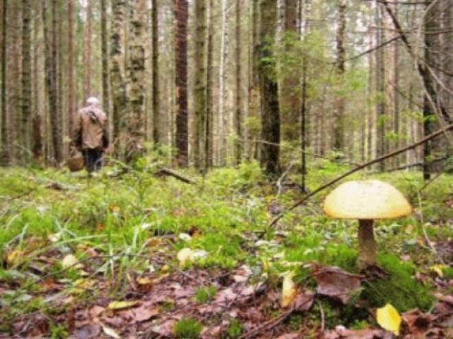 В Мордовии пропали два грибника
