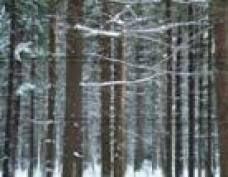 Большеигнатовские леса Мордовии объявят карантинной зоной