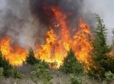 МЧС: причина лесных пожаров в Мордовии — люди