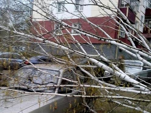 Жителю Мордовии возместят ущерб за помятый деревом автомобиль
