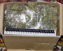 В Саранске вынесли приговор семейству наркодилеров