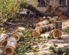В Мордовии депутат украл дерево