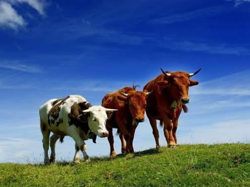 В развитие фермерских хозяйств Мордовии направят 14 млн рублей