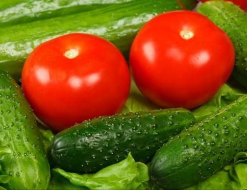 Мордовия накормит жителей соседних регионов огурцами и томатами
