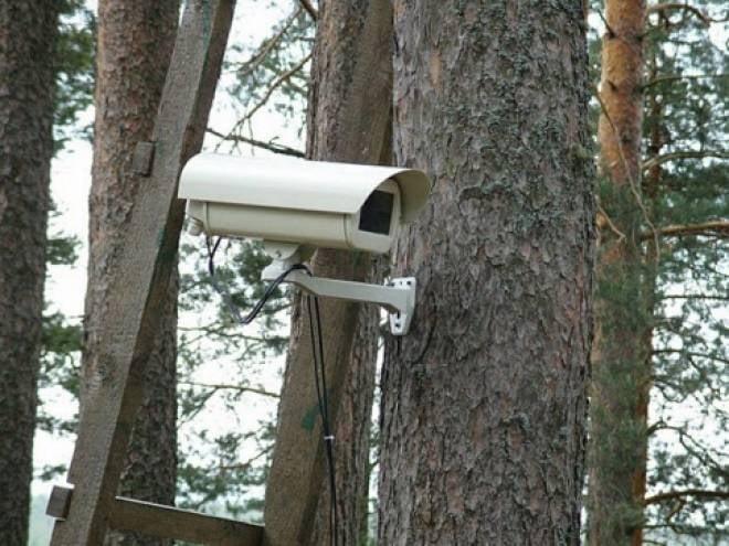 За лесами Мордовии установят видеонаблюдение