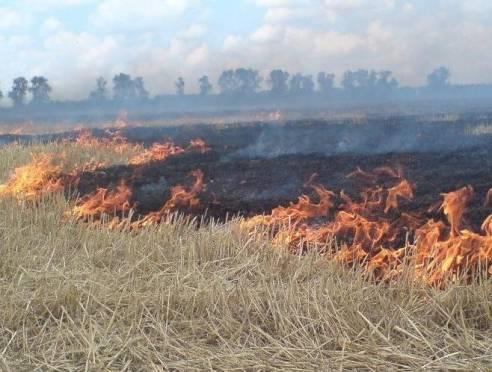 Сотрудники Мордовского заповедника спасли село