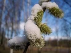 Погода в выходные: зима будет бороться с весной