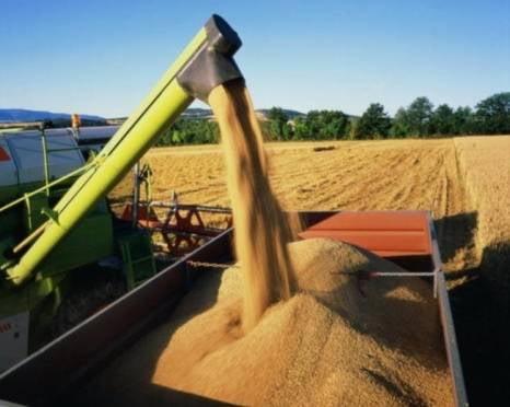 Инсарский район Мордовии ставит рекорды по урожайности зерновых