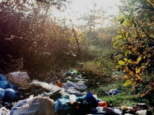 В Саранске пройдет экологический субботник