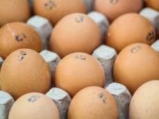 Рост цен на яйца в Мордовии удержат искусственно
