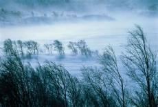 Синоптики обещают метель в Мордовии
