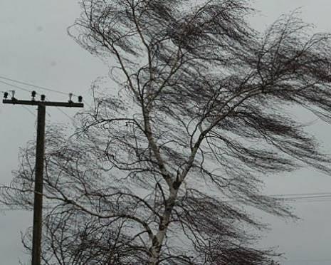 В Мордовии сегодня ночью ожидается сильный ветер