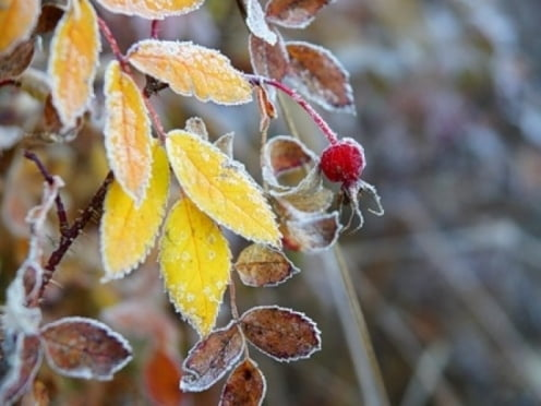 На выходных в Мордовии обещают ночные заморозки