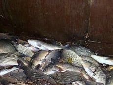 Жителя Мордовии поймали с незаконным уловом