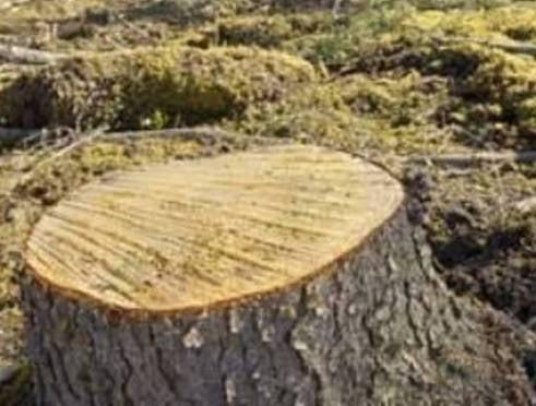 В Саранске избавились от 4000 угрожающих безопасности деревьев