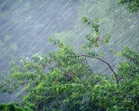 Завтра в Мордовию могут нагрянуть сильный ветер и гроза