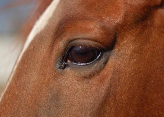 В Мордовии раскрыли кражу лошадей на миллион