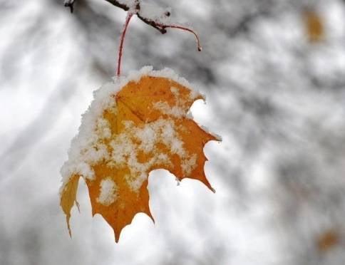 Синоптики обещают жителям Мордовии мокрый снег и заморозки