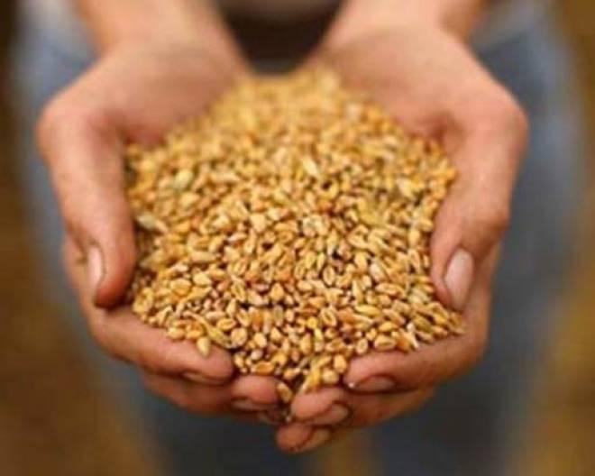 Фермер из Мордовии добился рекордных показателей урожайности
