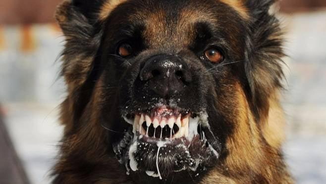 За нападения бродячих собак на людей в Мордовии ответят ленивые чиновники