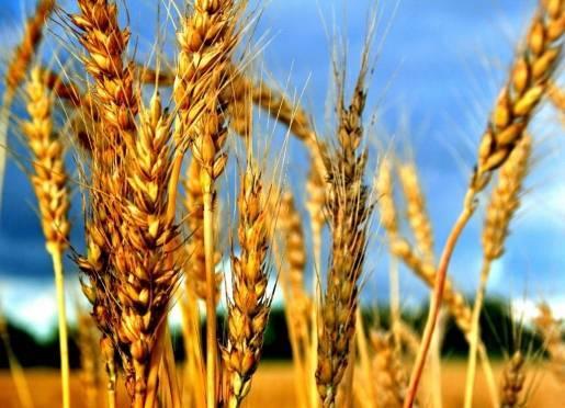 В Мордовии начали думать о будущем урожае